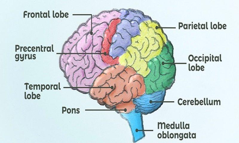 تغییر شخصیت در اثر آسیب مغزی